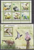 DB1 Fauna Flora Comore  Pasari PPorumbei  MS MNH