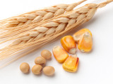 Seminte gazon cereale porumb lucerna rapita ingrasaminte pesticide bulbi fl. etc