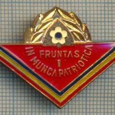 Y 853 INSIGNA - PIONIERI -FRUNTAS IN MUNCA PATRIOTICA - PENTRU COLECTIONARI
