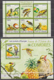 DB1 Fauna Flora Comore  Pasari Grangur  MS MNH