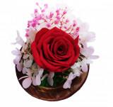 Cumpara ieftin Trandafir Criogenat rosu, BV, Hortensia cu Licheni, 2CRIO