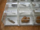 Colectie fosile autentice