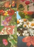 Flori vederi 100