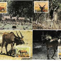 Fauna WWF - 4 Maxime - set complet