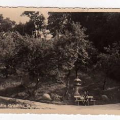 CLUJ gradina botanica gradina japoneza KOLOZSVAR