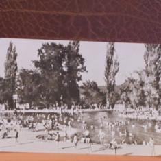 R.P.R. - BAILE FELIX- LA  SCALDAT - CIRCULATA, TIMBRATA., Fotografie