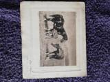 fotografie veche  cai