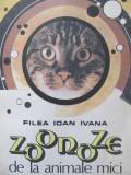 Zoonoze de la animale mici - Filea Ioan Ivana