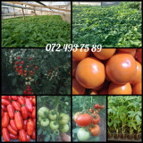 Rasaduri viguroase legume