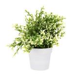 Cumpara ieftin Planta artificiala decorativa, cu frunze ascutite verde cu alb, H 24 cm, in ghiveci plastic alb, 8.5x9cm
