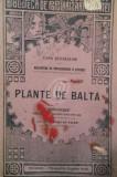 Plante de balta