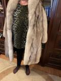 Vand Blana vulpe polara argintie