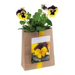 Punguță cu semințe Viola foto