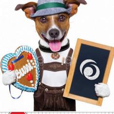 Caiet A5,48file,Cool Dog,matematica