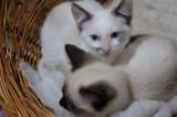 Ofer cadou pisicuțe lîngă Bacău
