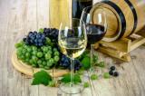 Vand struguri / must / vin, sortiment traminer si otonel