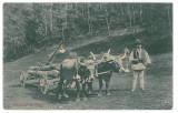 1904 - SIBIEL, Sibiu, ETHNIC with Cart, Romania - old postcard - unused