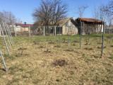 Butasi vita de vie nobila struguri de masa, Plant