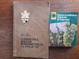 Lot 2 carti despre ingrijirea vitei de vie / R7P3S, Alta editura