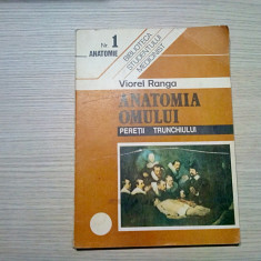 ANATOMIA OMULUI * Peretii Trunchiului ( Nr. 1) - Viorel Ranga - Cerma, 187 p.
