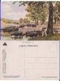 Pantelimon - Bucuresti - Tipuri, bivolite-Marvan