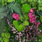 Gradina verticala mix: muschi, licheni si plante conservate 1m x1m
