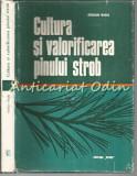 Cumpara ieftin Cultura Si Valorificarea Pinului Strob - Stelian Radu
