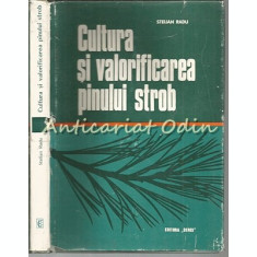 Cultura Si Valorificarea Pinului Strob - Stelian Radu