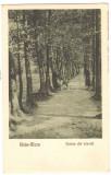 SV * Baia Mare * VEDERE DIN LIVADA * 1925, Circulata, Necirculata, Fotografie, Printata