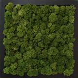 Tablou licheni Artflora Uni GreenBroccoli MDF Negru 25CM
