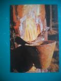 HOPCT 55918  LA COLECTAT RASINA DE BRAD - VIATA LA TARA /PAMANTUL-NECIRCULATA