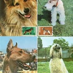 Fauna, Caini, Maxime