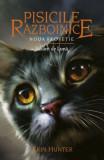 Cumpara ieftin Pisicile războinice (Vol. 8) Răsărit de Lună