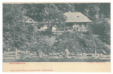 4728 - BAIA-MARE, Maramures, Country Life, Romania - old postcard - unused