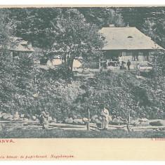 4728 - BAIA-MARE, Romania - old postcard - unused, Necirculata, Printata