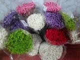 Plante naturale uscate - Imortele glixia - diverse culori,50 gr buchetul