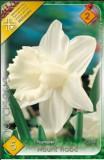 Narcise trumpet Mount Hood (5 bulbi)
