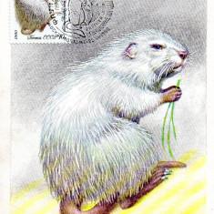 URSS 1980 CM, Fauna Nutrie, Maxime