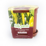 Set de cultivare Ardei iute Chilli Hungarian Wax