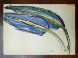 36. Plante, acuarela veche, pictura