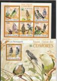 Fauna ,pasari,papagali,Comore.