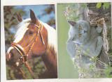 bnk cp Lot 10 carti postale fauna - animale - necirculate