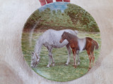 APLICA DIN PORTELAN - CAI