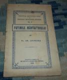 Gr. Criveanu Patimile Mantuitorului 1923 Cernica