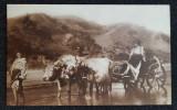 Carte postala Romania - Car cu boi - cliseu Colectia A. Bellu