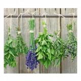 Cumpara ieftin Placa din sticla protectie perete/plita, Herbs, L56xl50 cm