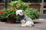 Pulover simplu tricotat - Cold Breeze - 20 cm - 72443