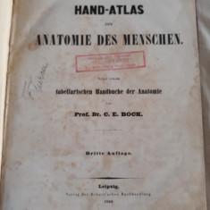 C.E. BOCK - HAND-ATLAS DER ANATOMIE DES MENSCHEN. 1850