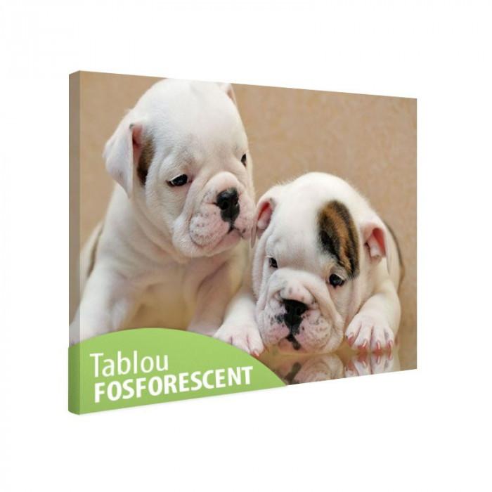 Tablou canvas fosforescent Bulldog Puppies, 52x90 cm