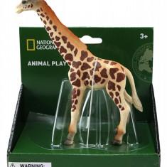 Figurina Girafa - National Geographic